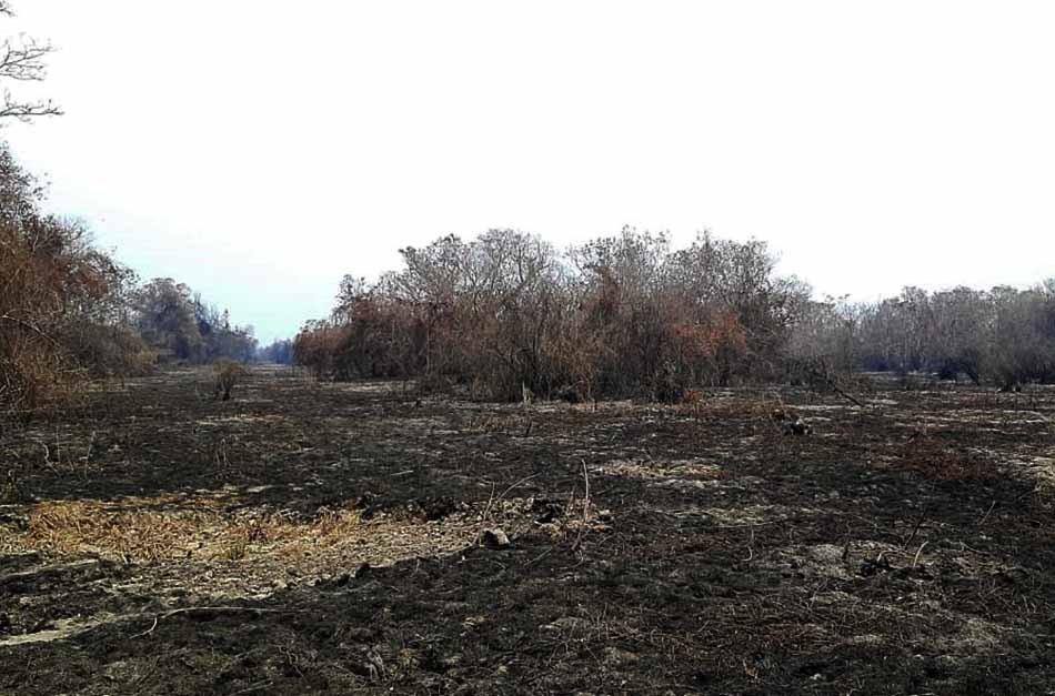 TCE-MT e CET-Pantanal acompanham ações de enfrentamento às queimadas no Pantanal
